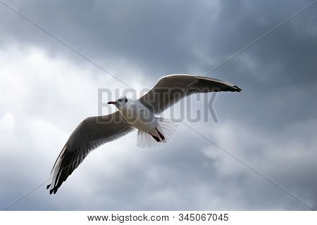 Close Up Of A Gull Flying On The Sky