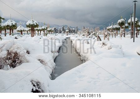 Palm Trees And Pool At The Park Covered With Snow, Unusual Weather On Subtropics