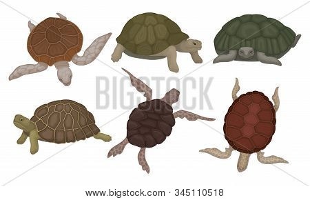 Sea Turtles And Land Tortoises From Different Perspectives Isolated On White Background Vector Set