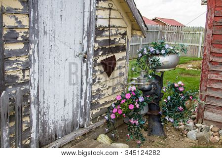 Rustic Country Garden Shed. Exterior Of Garden Shed With A Variety Of Potted Petunias At The Entranc