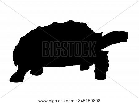 Turtle Silhouette Vector Illustration Isolated Black Color
