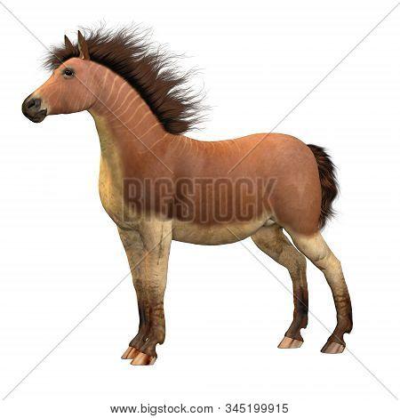 Equus Scotti Horse 3d Illustration - This Primitive Horse Lived In North America During The Pleistoc