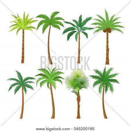 Palm Trees Flat Vector Illustrations Set. Exotic Beach Plants Isolated Design Elements Pack. Green L