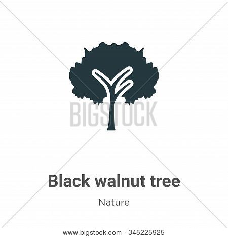 Black walnut tree icon isolated on white background from nature collection. Black walnut tree icon t