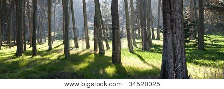 Panoramic view of a forest