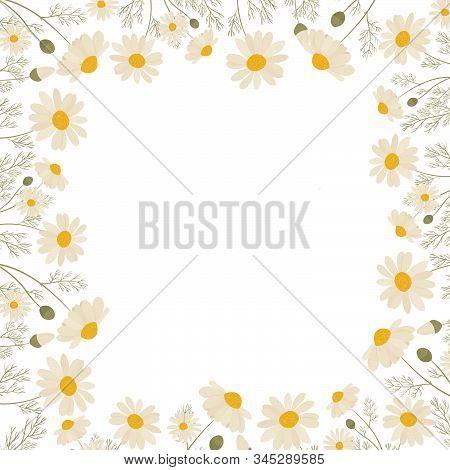 Chamomile Frame Isolated On White Background. Vector Illustration Of White Daisy Flowers. Design For