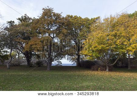 View Of Colorful Trees And Bushes In A Public Park. City Wall And The Sea In The Background.