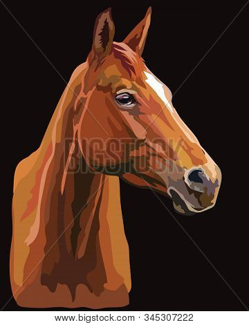 Colorful Drawing Horse Portrait. Horse Head In Profile Isolated On Black Background. Vector Drawing