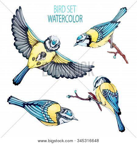 Set Bird Elements For Spring Holliday, Festival. Vector Stock Illustration In Vintage, Watercolor Ha