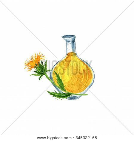 Watercolor Drawing Safflower Oil, Bottle Of Vegetable Oil And Plant, Hand Drawn Illustration