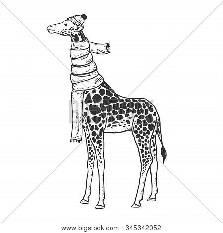 Giraffe Neck Is Wrapped In Scarf And Winter Hat Sketch Engraving Vector Illustration. T-shirt Appare