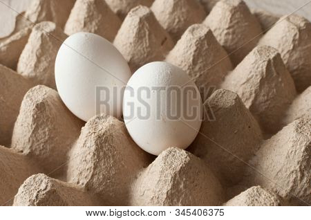 Chicken eggs in a tray, Empty cardboard tray with two eggs. A pair of white eggs.