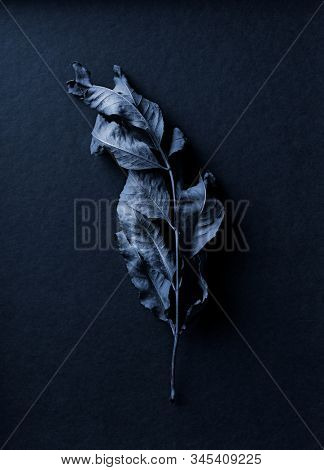 Blue toned dry leaf on dark blue background. Still life