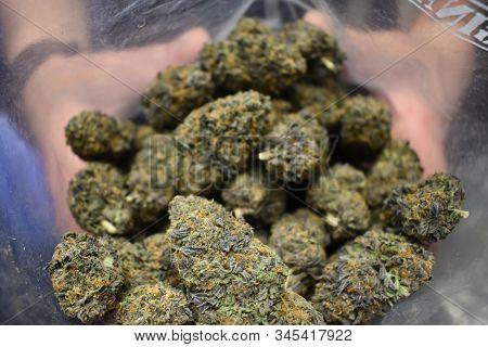 Bag Of Purple Skittles Indica Marijuana Strain.  This Big Bag Of Weed In Ziploc Has Nice Full Buds W
