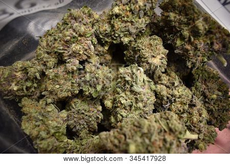 Bag Of Cannabis Flower.  Dried Marijuana Plant Of Indica Strain In Ziploc Bag.  Trimmed Buds Perfect