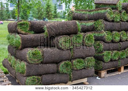 Turf Grass Rolls For Lawn. Carpet Of Turf, Roll Of Sod For Landscaping. Installation Of Modern Lands