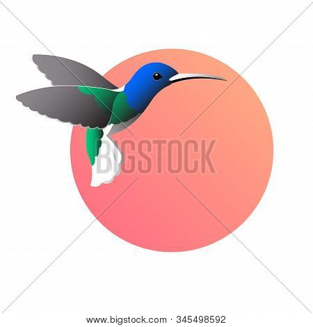 A Colorful Drawing Of A Bird Colibri On A Round Red Background.