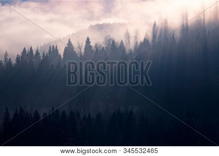 Abstract landscape of fog and sunbeams over winter pine forest. Pine trees silhouette.