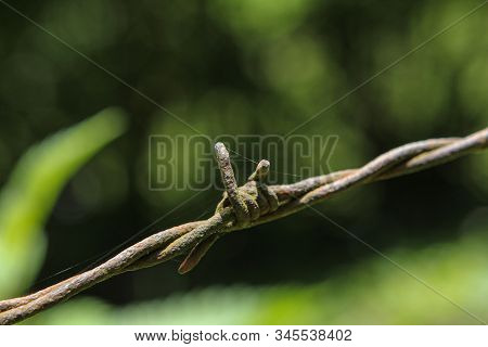 Barbwire Securing A Piece Of Land With Out Of Focus Plants In Background