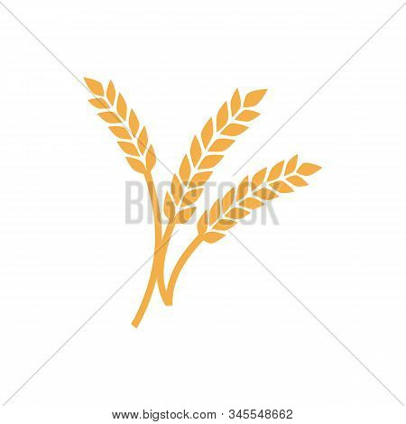 Realistic Yellow Ripe Spikelets And Grains Of Wheat Composition On White Background 3d Vector Illust