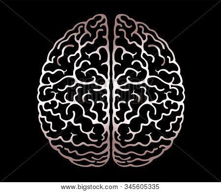 Vector Outline Illustration Of Human Brain On Black Background. Cerebral Hemispheres, .convolutions