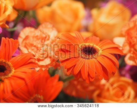 Orange Gerbera , Barberton Daisy Flower On Bush Blurred Of Rose Carnation Background