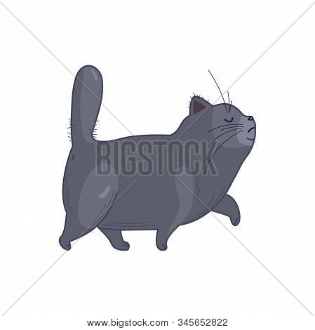 An Important Fat British Cat Walks Proudly, His Nose High In Cartoon Style. - Vector