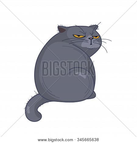 Offended British Fat Cat Sits Back, Looking Grimly On A White Background