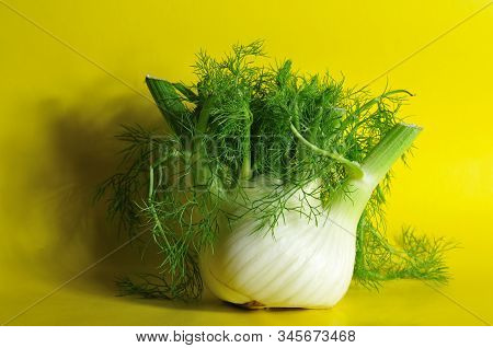 Bulb-like Stem Base Of A Fennel With Feathery Fine Leaves