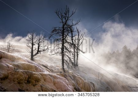 Dying Trees On Terrace Of Mammoth Hot Spring Covered By Smoke From Hot Water, Yellowstone National P