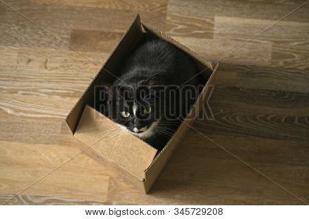 Beautiful Long Hair Cat Sitting In A Cardboard Paper Box And Looking At The Camera. Indoor And Trans