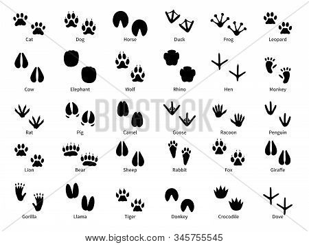 Animal Footprints. Walking Track Animals Paw With Name, Pets Tracks, Bird And Wild Animals Trail, Wi