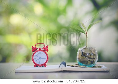 Tree In A Glass Bottle.tree On The Coin.growing Business Growth. Coins In Glass Jar With The Small T