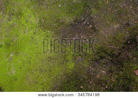 Stock Photo Texture Background Of Cement Covered With Moss.