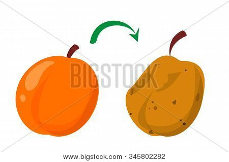 Rotten Peach And Fresh Fruit Vector Isolated. Food Waste