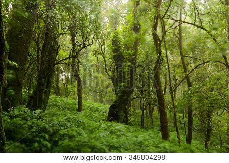 Trees And Forests In The Range Rain Forest Green Moss At Angka Nature In Doi Inthanon National Park