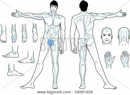 Full length (front & back) views of a standing naked man with massaging lines
