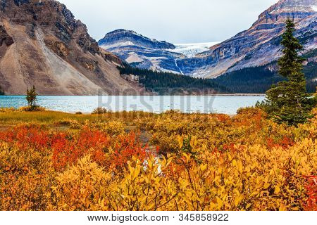 Red, yellow and orange autumn grass on the shores of the Bow Lake. Lake cold glacial water is rippled. The Rockies of Canada. The concept of active, environmental and photo tourism