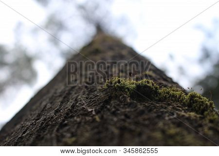 Detailed Moss Growing On Tree, Moss Covered Base Of Tree Looking Into Blurred Sky, Rainforest Moss,