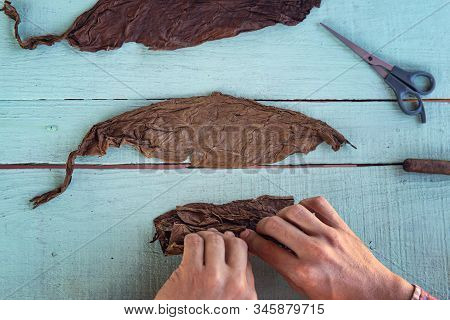 Closeup Of Hands Making Cigar From Tobacco Leaves. Traditional Manufacture Of Cigars. Cuban Cowboy I