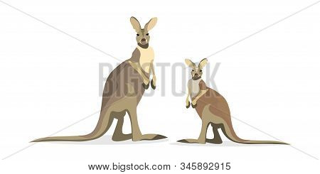 Cute Kangaroo Isolated On White Background Flat Vector Illustration. Wallaby Mom With Little Cub. Ex