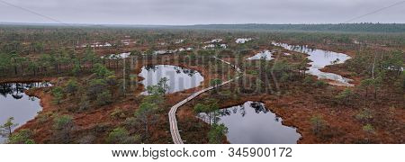 Autumn Swamp In The National Park. View On The Nature