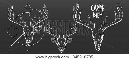 Hand Drawn, Deer Skull And Face Silhouette. Vintage Deer Head Vector Illustration, Scratchboard, Eng