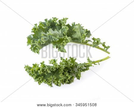 Kale Leaves Isolated On White Background. Top View. Kale Leaves With Copy Space For Text. Herbs Isol