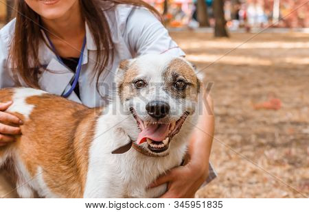 Happy Grinning Dog In The Arms Of Smiling Veterinarian Woman In A White Coat And Badge On An Autumn