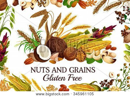 Nuts And Grains Gluten Free Natural Food. Vector Cereal, Corn And Kernels, Seed Snacks. Pistachio An