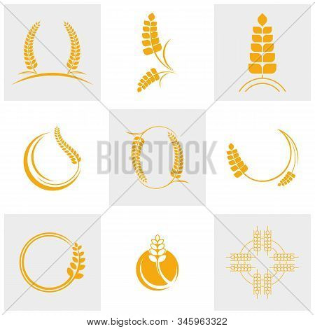 Set Of Agriculture Wheat Logo Template Vector, Luxury Wheat Logo Concept, Icon Symbol