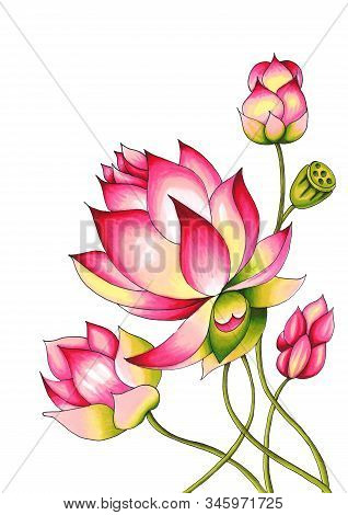 Blooming Lotus. Hand Drawn Decorative Design Element. Alcohol Markers Illustration Isolated On A Whi