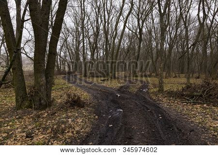 Spring Nature. Early Spring In Foggy Forest. Landscape With Two Winding Black Dirt Road Winds Among