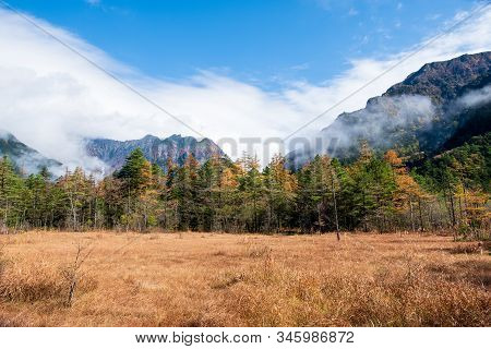 Mountain Scenery, Golden Field And Pine Trees Forest In Front Of Big Mountain Range With Clouds In A